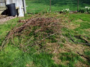 the pile of grapevines that Ken cut down this spring (2013)